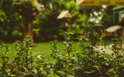 Sådan personliggør du din nye have