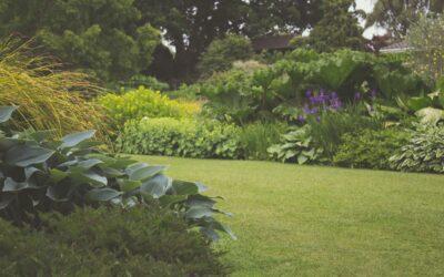 Tips til en grøn og veltrimmet græsplæne