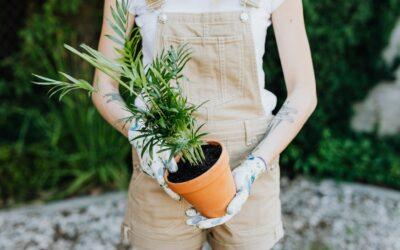 Få din have til at fremstå indbydende igen