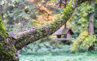 Beskæring af træer forskønner haven